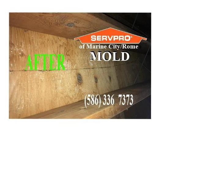 Moist Air In Attic - MOLD - SERVPRO of Marine City/Romeo After