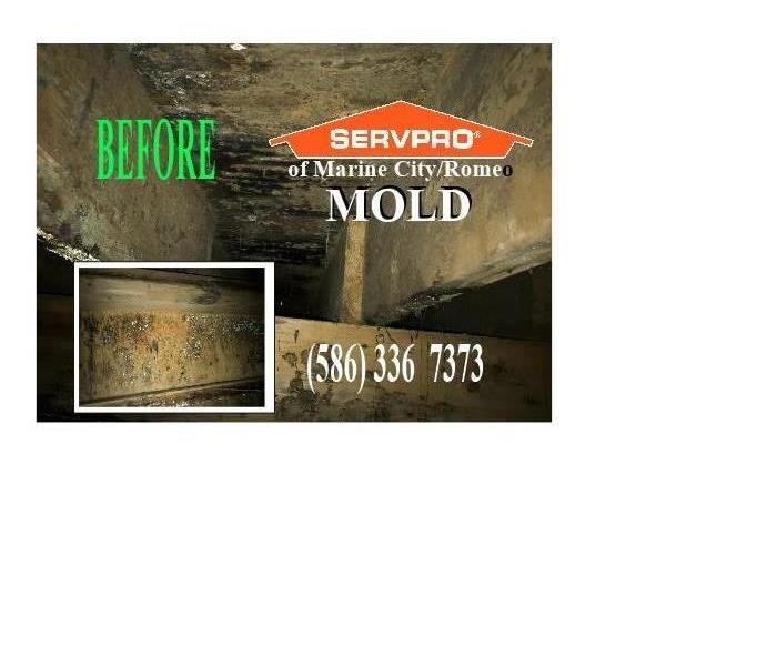 Moist Air In Attic - MOLD - SERVPRO of Marine City/Romeo Before
