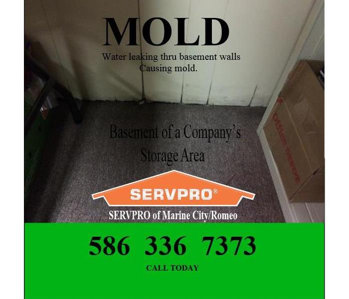 Mold in  Storage Area - Business