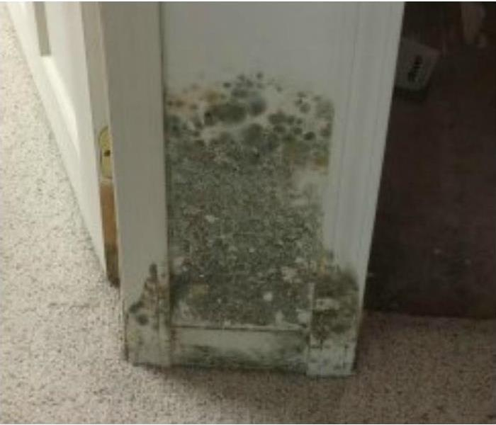 Mold Remediation - Algonac MI